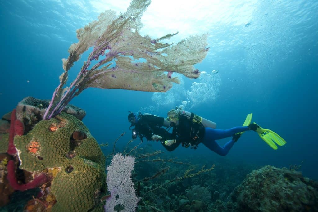 Corals and divers on Malapascua