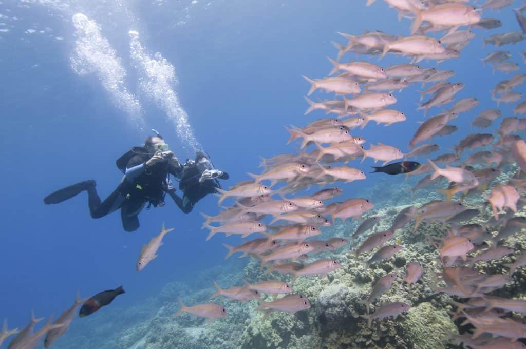 Digital Photography with Thresher Shark Divers Malapascua