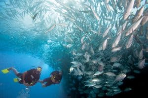 Specialty Dive Malapascua Island