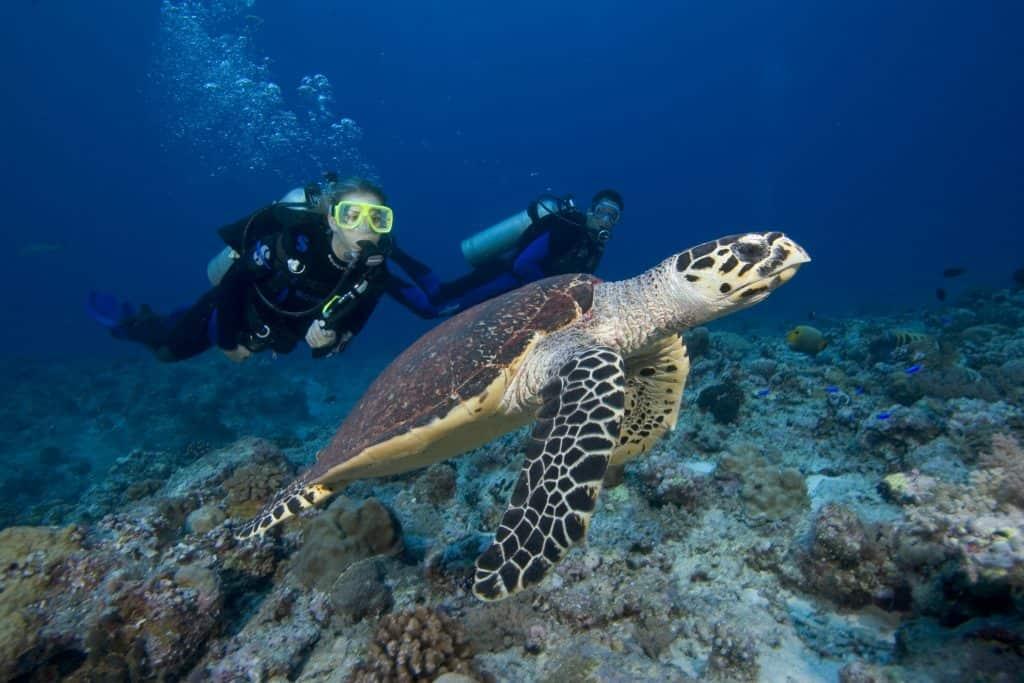 Deep dive with turtle on Malapascua Island