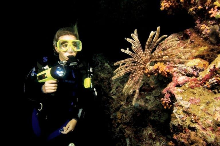 Night Diving on Malapascua Island