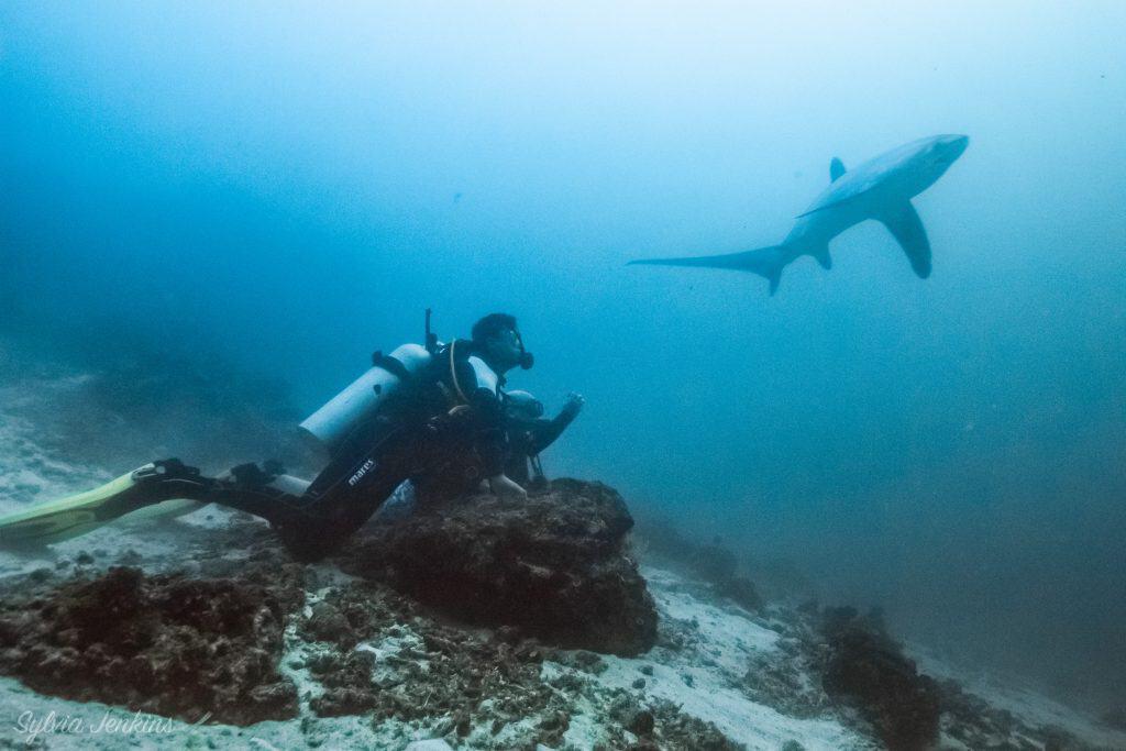 Divers Close to Thresher sharks on Malapascua island