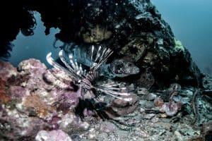 Wrecks on Malapascua Island