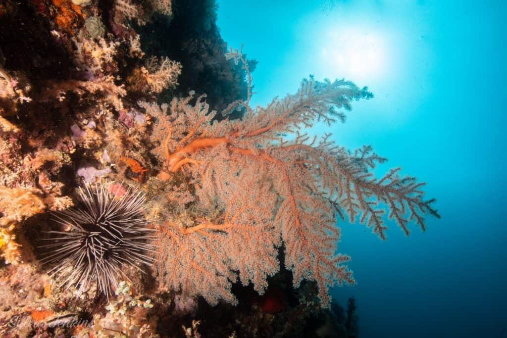 Soft Coral Malapascua Island