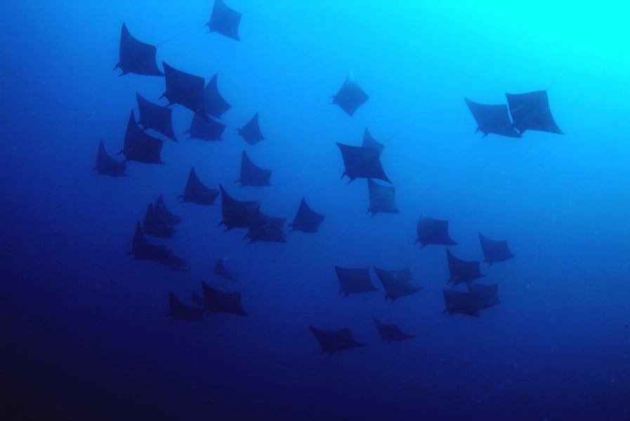 Tubbataha Reef Liveaboards